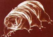 Life in Extreme Environments tardigrade